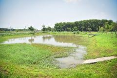 Сценарная вода пруда стоковое фото