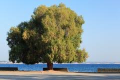 Сценарная набережная с пустыми стендами и зеленым деревом Стоковые Изображения