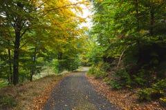 Сценарная съемка узкой дороги вдоль леса Стоковое Изображение