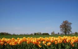 сценарное время весны стоковая фотография