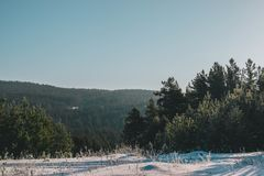 Сценарное изображение дерева спрусов Морозный день, спокойная зимняя сцена лыжа курорта Большое изображение одичалой области Иссл стоковые изображения