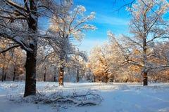 Сценарное изображение дерева спрусов Морозный день, спокойная зимняя сцена лыжа курорта Исследуйте красоту земли Деревенский дом  стоковые фотографии rf