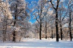 Сценарное изображение дерева спрусов Морозный день, спокойная зимняя сцена лыжа курорта Исследуйте красоту земли Деревенский дом  стоковое изображение rf