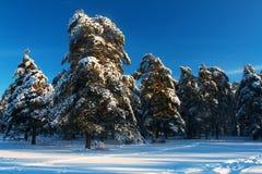 Сценарное изображение дерева спрусов Морозный день, спокойная зимняя сцена лыжа курорта Исследуйте красоту земли Деревенский дом  стоковые изображения
