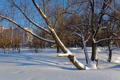 Сценарное изображение дерева спрусов Морозный день, спокойная зимняя сцена лыжа курорта Исследуйте красоту земли Деревенский дом  стоковые фото