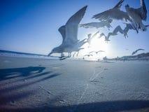 Сценарные взгляды на пляже Северной Каролине острова дуба стоковая фотография