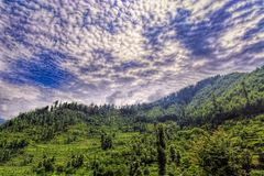 Сценарные глубокие тропические джунгли леса на Janjehli, Гималаях, Индии Стоковое фото RF