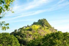 Сценарные горы зеленого чая, Цейлон стоковая фотография