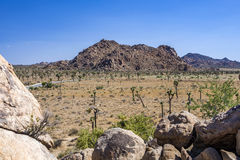 Сценарные утесы в национальном парке дерева Иешуа Стоковое Изображение RF