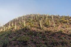 Сценарный ландшафт национального парка Saguaro Стоковая Фотография RF