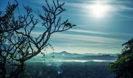 Сценарный ландшафт долины горы чая, Цейлон стоковое изображение rf