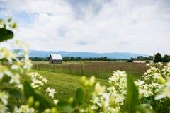 Сценарный ландшафт Elkton, Вирджинии вокруг соотечественника Shenandoah Стоковое Фото
