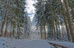 Сценарный взгляд живописного пути в лесе и облачном небе зимы Стоковая Фотография