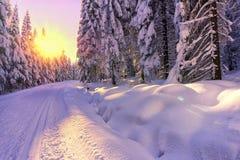 Сценарный взгляд захода солнца в лесе горы зимы Стоковые Изображения RF