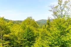 Сценарный взгляд зеленого леса стоковые изображения