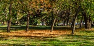 Сценарный взгляд парка города в осени Стоковая Фотография RF