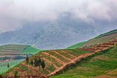 Сценарный взгляд полей горного склона vegetable на предпосылке туманной горы Стоковое Изображение