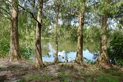Сценарный взгляд садов фламинго в южной Флориде, США Стоковая Фотография RF