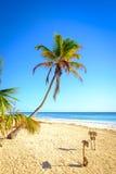 Сценарный взгляд ландшафта пляжа лета с пальмами Стоковые Фото