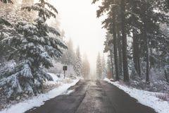 Сценарный взгляд дороги в лесе при покрытый снег Стоковая Фотография