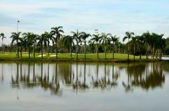 Озеро, ловушки песка, пальмы & гольф стоковое фото rf