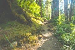 Сценарный взгляд пути пути в лесе с светом солнца Стоковое Изображение