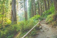 Сценарный взгляд пути пути в лесе с светом солнца Стоковые Изображения