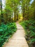 Сценарный взгляд пути пути в лесе с светом солнца Стоковые Изображения RF