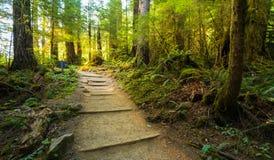 Сценарный взгляд пути пути в лесе с светом солнца Стоковая Фотография RF