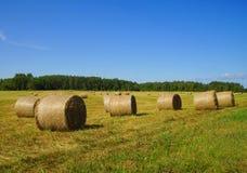 Сценарный взгляд пшеничного поля на солнечный день Стоковое Фото