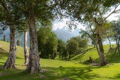 Сценарный естественный ландшафт леса в утре стоковые изображения rf