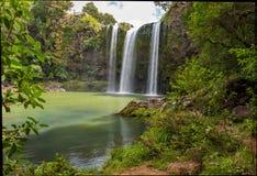 Сценарный запас окружая известный водопад Whangerei 26 m стоковое фото rf