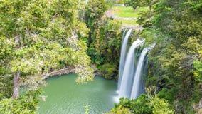 Сценарный запас окружая известный водопад Whangerei 26 m стоковое фото