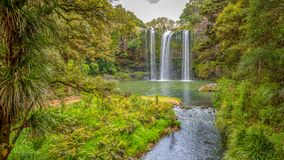 Сценарный запас окружая известный водопад Whangerei 26 m стоковое изображение rf