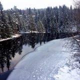 Сценарный ландшафт зимы заводи с следами леса и животного стоковые изображения rf