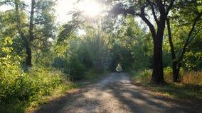 Сценарный ландшафт леса в раннем утре Лучи солнца протекают через ветви деревьев Сцена восхода солнца сток-видео