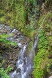 Сценарный ландшафт потока тропического леса Мауи Стоковое Изображение