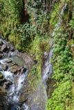 Сценарный ландшафт тропического леса Мауи Стоковое Фото