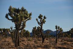 Сценарный национальный парк дерева Иешуа Стоковое Изображение