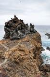 Сценарный одичалый взгляд побережья вулканической породы и естественных бассейнов Стоковое Изображение RF