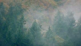 Сценарный одичалый лес в толстом тумане видеоматериал