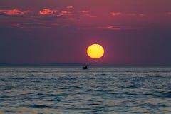 Сценарный остров Далматина захода солнца стоковое изображение rf