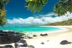 Сценарный пляж коралла с пальмами и утесами вулкана стоковая фотография rf