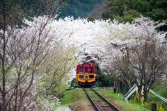 Сценарный поезд с цветением Сакуры Стоковая Фотография