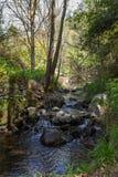 Сценарный поток воды в Tris Elies, лесе гор Troodos стоковая фотография rf