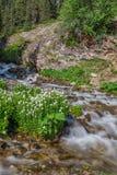 Сценарный поток горы в лете Стоковые Фотографии RF