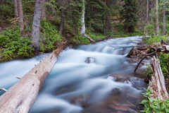 Сценарный поток горы Колорадо Стоковая Фотография RF