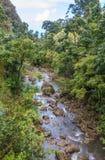 Сценарный поток тропического леса Мауи Стоковая Фотография RF