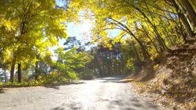 Сценарный привод вдоль гористых местностей леса, GoPro сток-видео