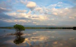 Сценарный пруд с отражениями облаков Стоковая Фотография
